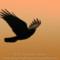 Common Raven at Patricks Point,  2012 April thumbnail