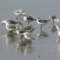 Sanderlings  on a Monterey Bay beach thumbnail