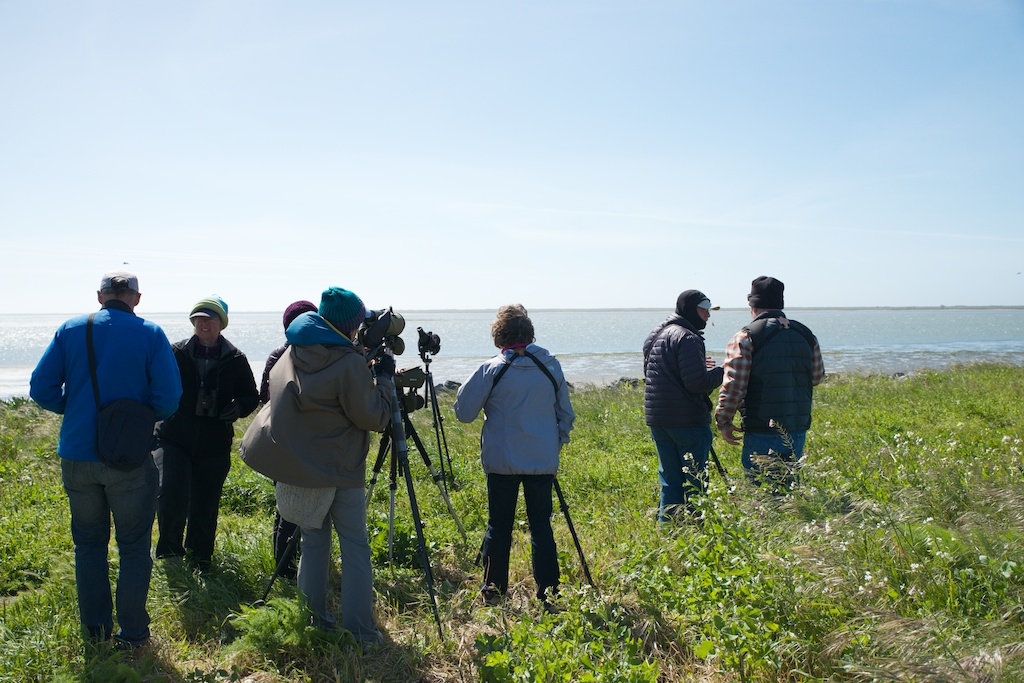 Birders at King Salmon