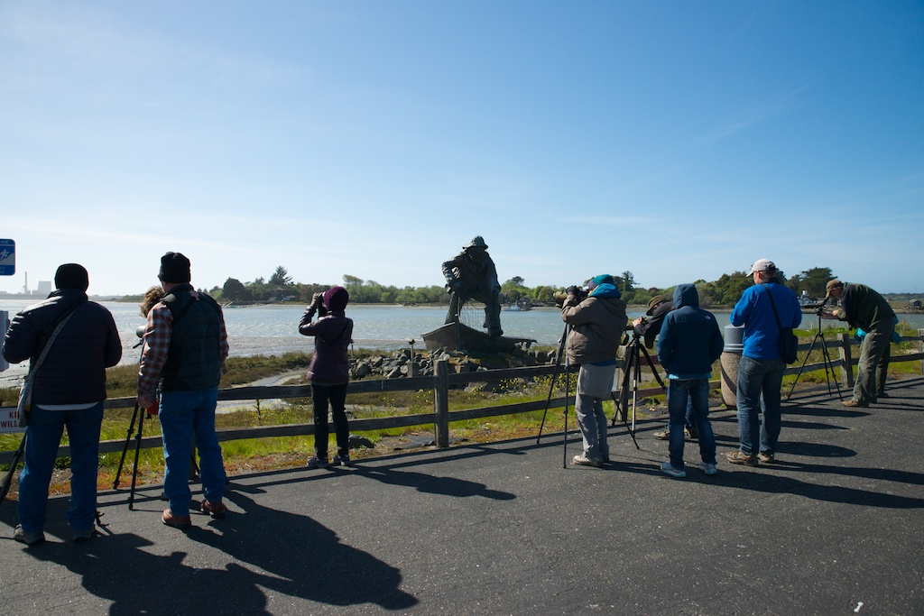 Birders at Woodley Island