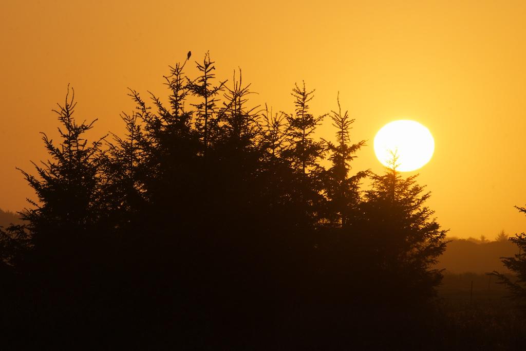 Kite at Sunset - VSt