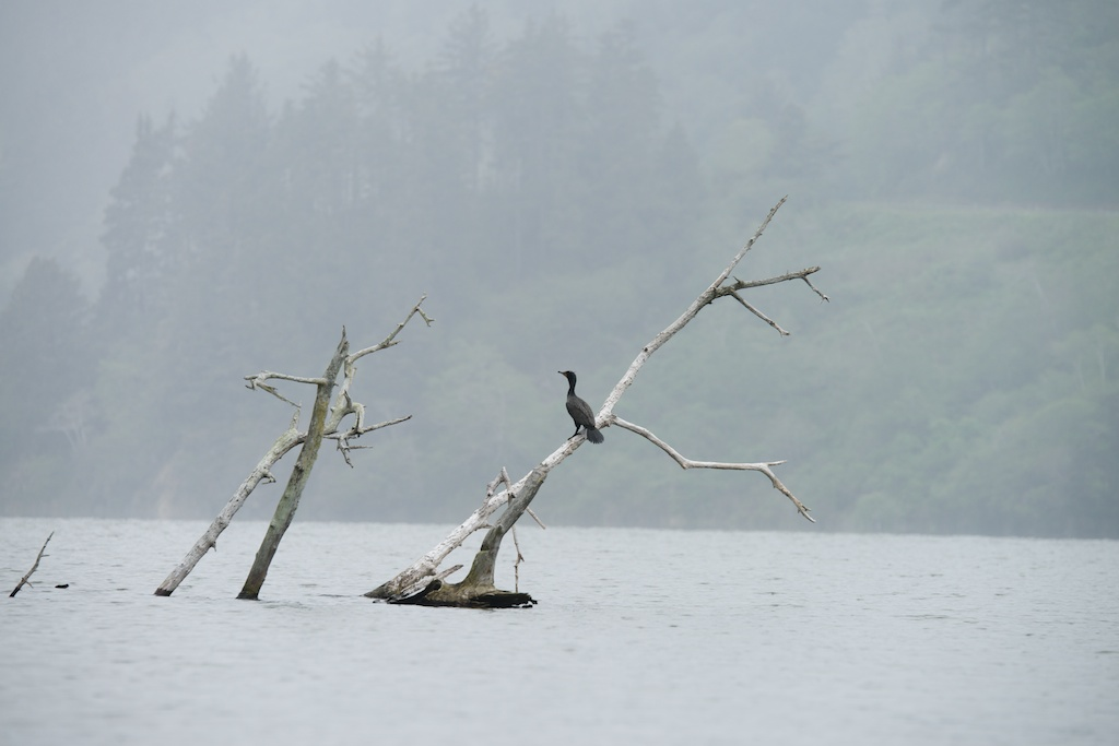 cormorant on branch