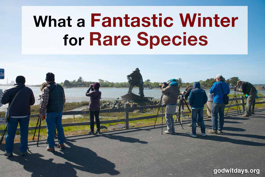 What A Fantastic Winter for Rare Species